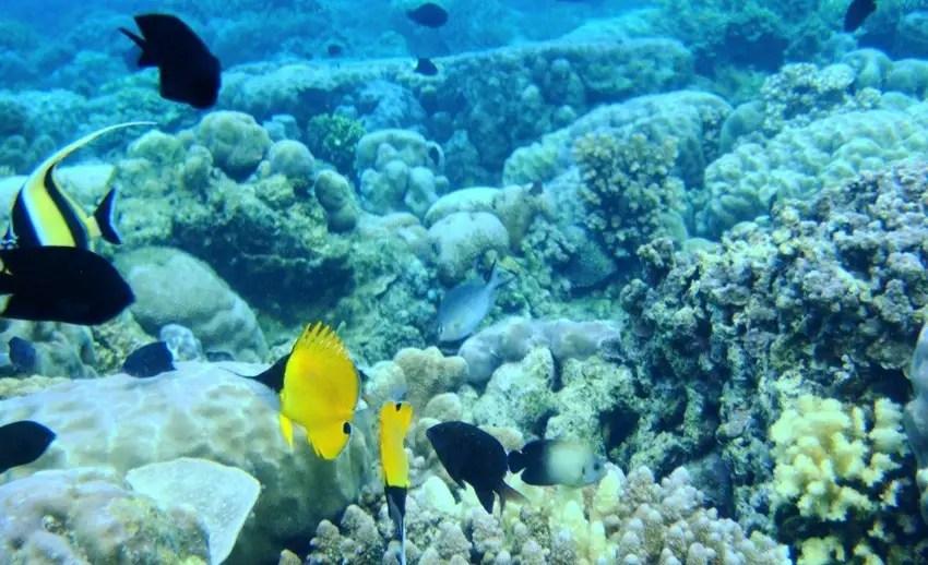 coral dan ikan di manado bay (by enjoyourholiday.com)