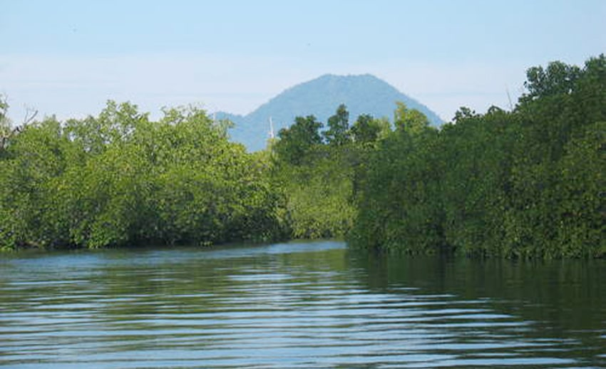 hutan bakau di mantehage. tampak obyek wisata manado tua di kejauhan