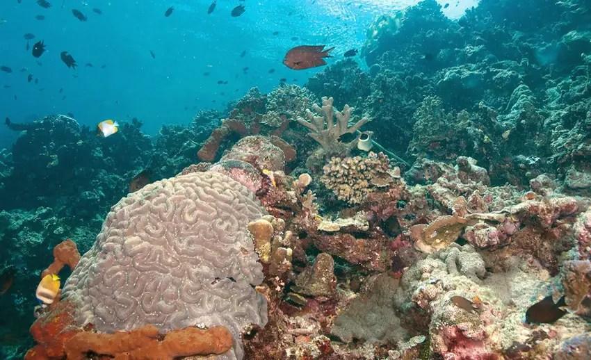 panorama bawah laut siladen
