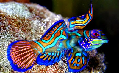 Jenis Ikan Hias Air Laut Gambar Ikan Laut 10 Jenis Ikan Hias Air Laut Yang Cantik Dan Unik Manandshark