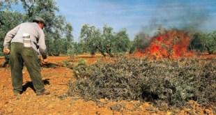 Solicitudes para el permiso de quema de residuos agrícolas