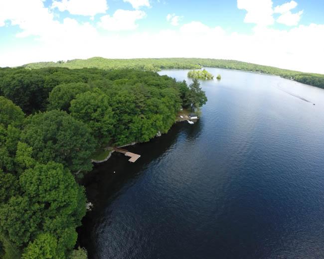 Dense forest along the lake shore