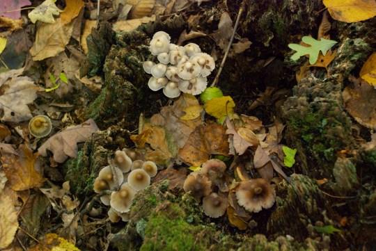 Waters Farm Mushrooms