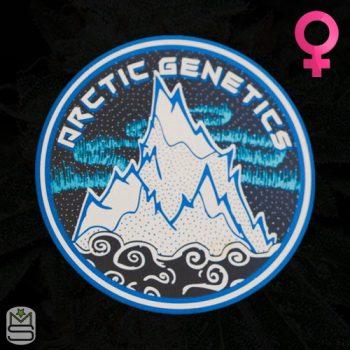 Arctic Genetics – Cherry Jesus