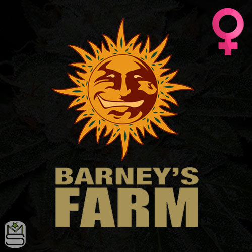 Barney's Farm Feminized