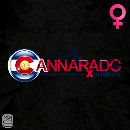 Cannarado Genetics Feminized
