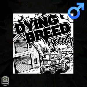 Dying Breed Seeds – Watermelon Zkittlez
