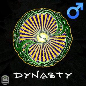 Dynasty Genetics – Charlotte's Web X Ms.universe