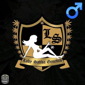 Lady Sativa Genetics – ODV3