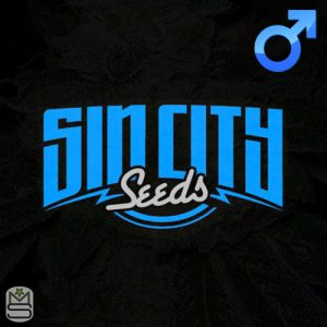 SinCity Seeds – Did I Do That