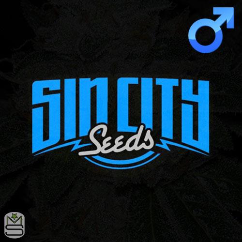 SinCity Seeds - Regular