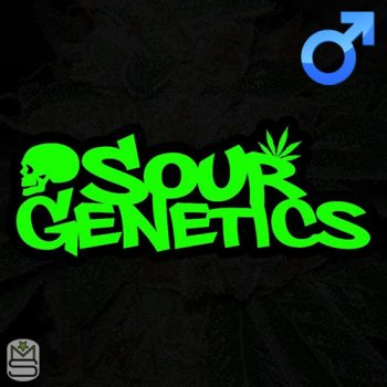 Sour Genetics – The Godfather