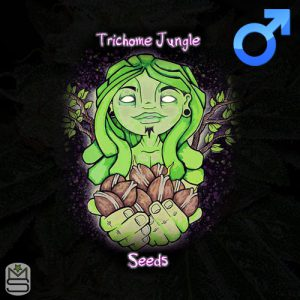 Trichome Jungle Seeds – Old Soul