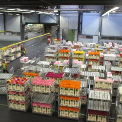 World largest flower auction in Aalsmeer