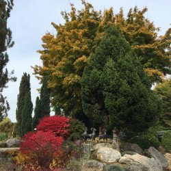 Dehner flower park in autumn