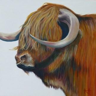 Gordon - Highland bull