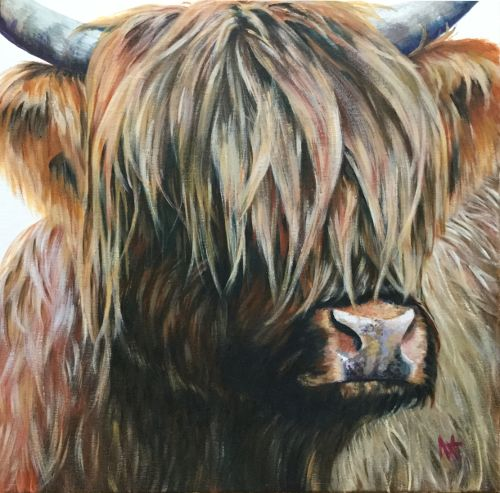 Hamish McDougall - Highland bull