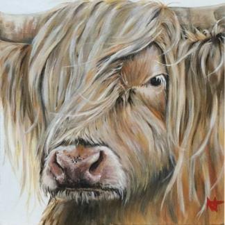 Goldie - Highland cow