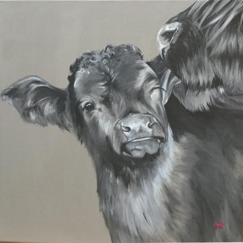 """Cow licking her calf, """"You will always be our baby"""""""