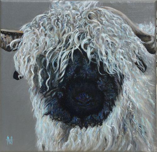 'Sugar' the Blackfaced sheep