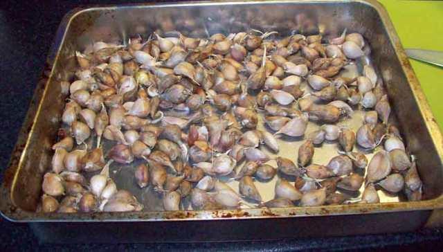 Garlic and shallot