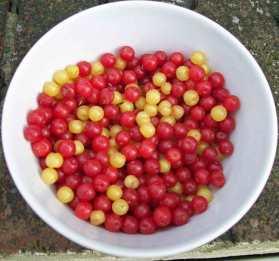 Dotberries