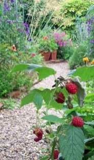 Autumn-fruiting raspberries