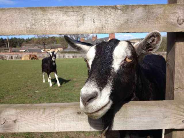 Beamish farm
