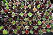 RHS Great London Plant Fair 2014