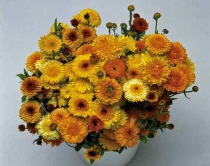 Calendula Cut Flower Mix