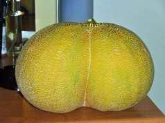 Bottom-shaped melon