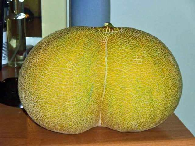 Bottom-shaped melon