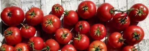 Tomato Heinz 1370. Picture; Dobies