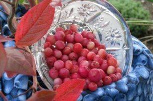 Blueberry Pinkberry Pink Lemonade