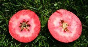 Redlove apple Era