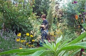 Mandy's garden