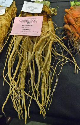 Heaviest parsnip 1st