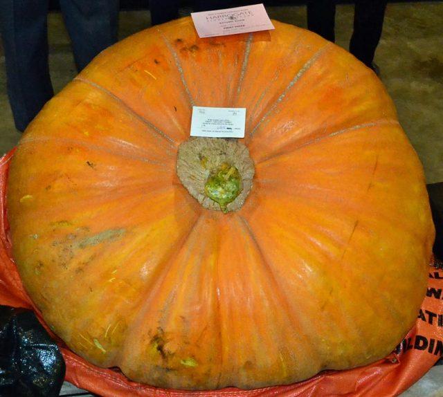 Heaviest pumpkin 1st