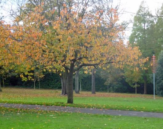 Autumn colours, Saltwell Park