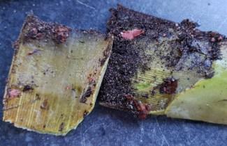 The unsightly Aloe vera pieces!