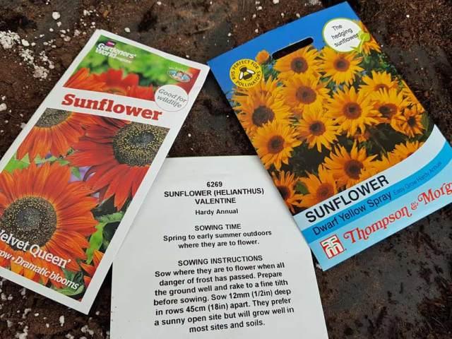 Sunflower seeds Velvet Queen, Valentine and Dwarf Yellow Spray