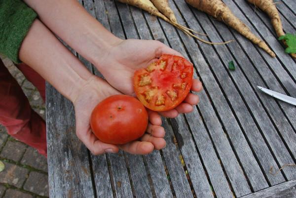 232-x tomato. Picture; Lubera