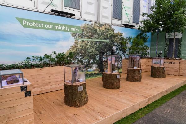 The Action Oak Partnership. Picture; RHS/Sarah Cuttle