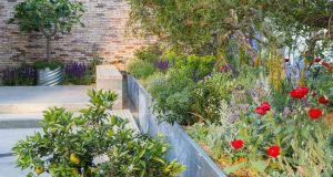 The Lemon Tree Garden. Picture; RHS/Neil Hepworth