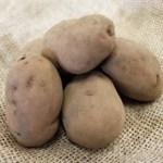 Potato Sarpo Axona. Picture; Lubera