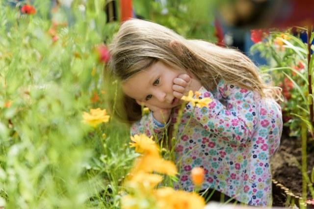 Child in the School Gardens, RHS Tatton Park 20 17. Picture; RHS/Georgi Mabee