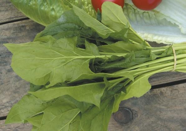Spinach (Oriental) Mikado F1. Picture; Mr Fothergill's