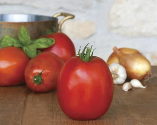 Tomato Super Sauce F1. Picture; Mr Fothergill's