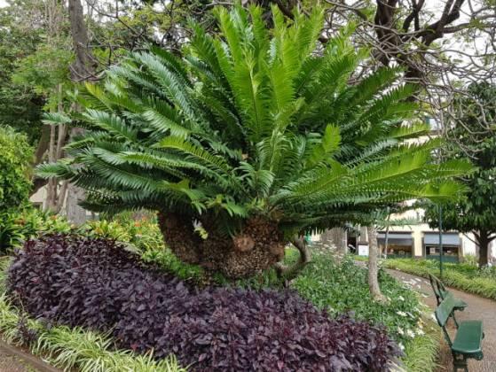 Is it a palm? Is it a plane? Funchal Municipal Garden