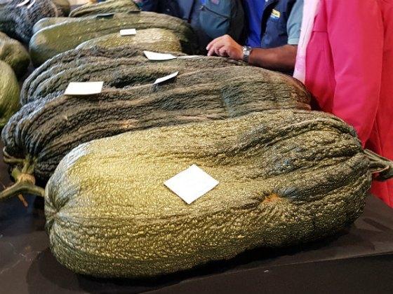 Stuff these! Giant marrows